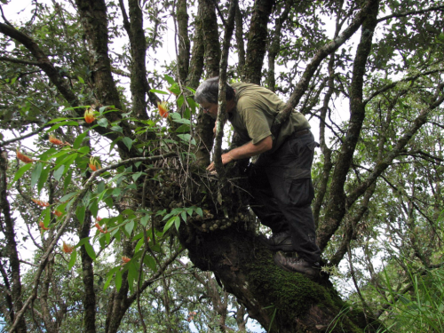 Mike Bordelon collecting a Rhynchanthus (Zingiberaceae) specimen in China in 2009. (photo by John Kress)