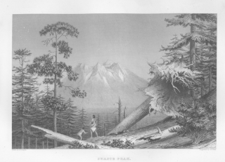 Pacific coastal forest from US Exploring Expedition journal 1838-1842.