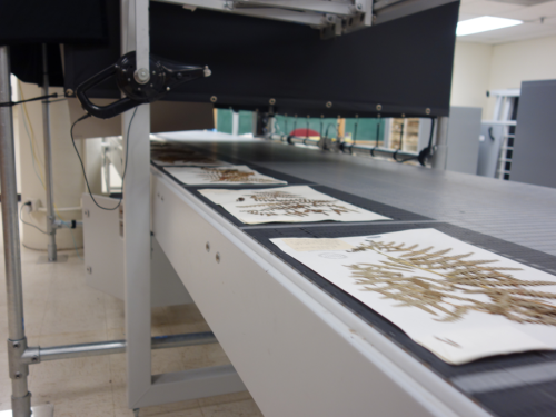 The Botany Digitization Conveyor project continues to work full speed ahead to digitize the pressed specimens of the U.S. National Herbarium. The conveyor is currently working at a rate of 15,000 new specimen images per week. (photo by Ingrid Lin)