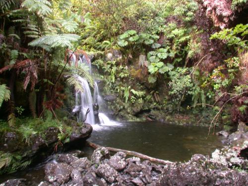 Typical habitat of Athyrium haleakalae around stream plunge pools, Hana Forest Reserve, East Maui, Hawaii. (photo by K.R. Wood)
