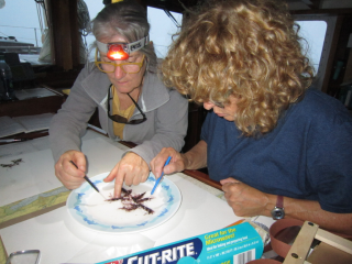 Sue Lutz (right) preparing alga for voucher herbarium, with Danielle Lucid. (photo by Karen Loveland Adey)