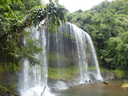 Taki Falls in Ngrardmau State, Babeldaob, Palau. Several terrestrial and epiphytic orchids were documented at this site. The trail leading to the waterfall is steep and passes through several distinct habitats that support a variety of orchid species. (photo by Benjamin J. Crain)