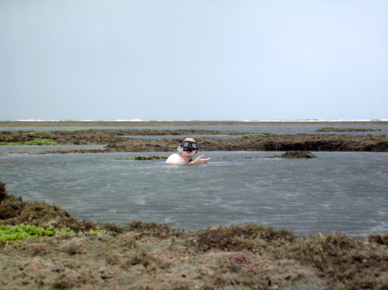 Sampling hydroids in Trairi, Ceará, Brazil.