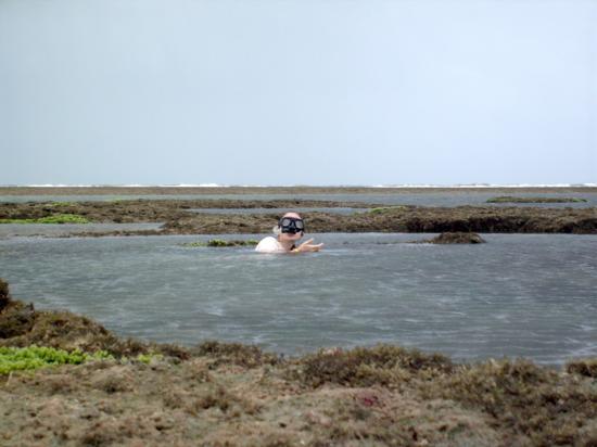 Sampling hydroids in Trairi, Ceará, Brazil.