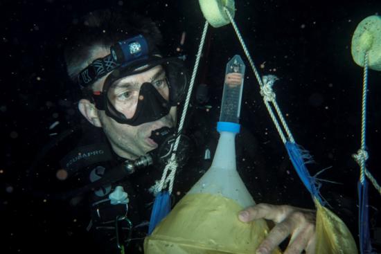 1 Henley coral spawn