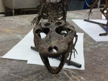 Front view of the cast skull of Stangerochampsa.