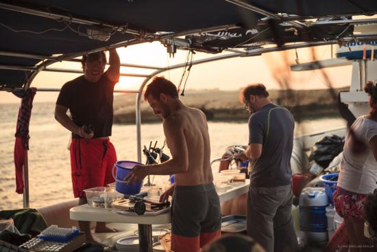 The marine invertebrate team processing specimens