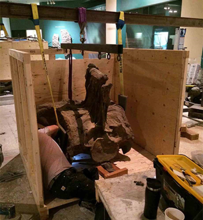 Packing the sacrum of the Diplodocus