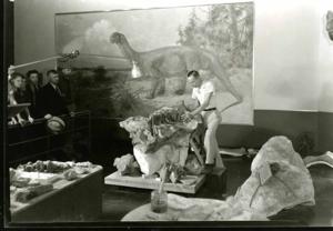 Boss prepares Camarasaurus2