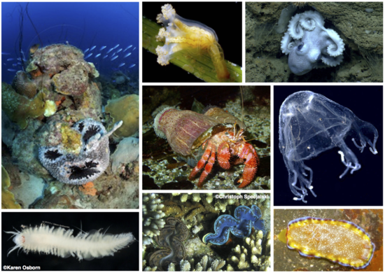 Invertebrates of all kinds rely on effective immune systems to ward off infection.