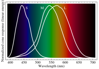 7)	Graph showing the response spectra of human cones, S, M and L types (photo credit BenRG, Wikipedia)