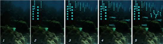 """This is a series of images showing how a typical nightly courtship display would look like, where certain males initiate the display (2), others follow (3), and different species display their own unique """"light shows"""" nearby (4 and 5). (Courtesy of Gretchen Gerrish [4])"""