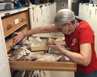 Volunteer Mary Mellot put many hours into ensuring that all coral specimens in IZ were catalogued ahead of the collection's move.