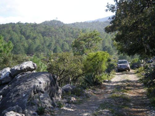 The rocky road through Sierra Las Cautivas, along the Tamaulipas/Nuevo Leon border, September 2007. (photo by Jeffery M. Saarela)