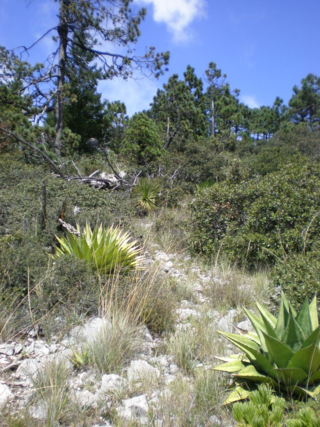 Summit of Sierra Zapaliname above Saltillo, Coahuila, September 2007. (photo by Jeffery M. Saarela)