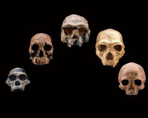 HO skull casts front
