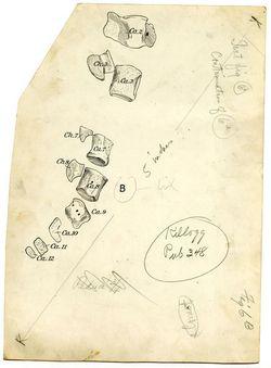 196 Cetotherium furlongi 434_jpg