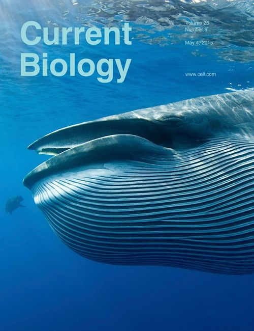 Current Biology cover Vogl et al 2015
