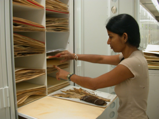 Vinita Gowda has been sorting and filing types for the past two years. (Photo by Gary Krupnick)
