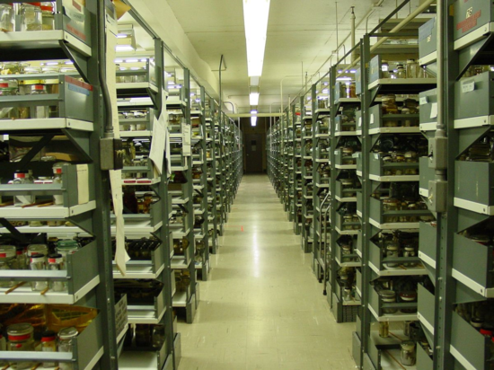 The polychaete collection at the Smithsonian National Museum of Natural History