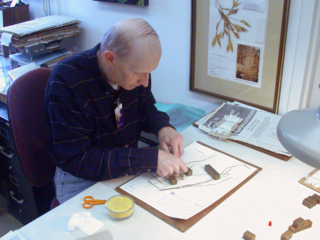 Volunteer Larry Owens mounting a specimen at the US National Herbarium. Photo by Deborah Bell