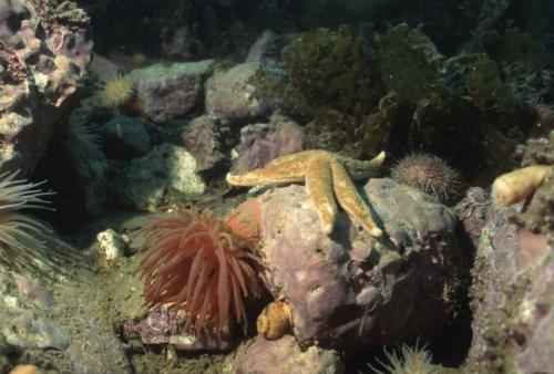 Typical coralline bottom Baffin
