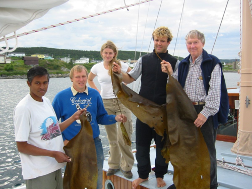 Holding the Subarctic kelp Saccorhiza dermatodea in St. Anthony, Newfoundland, is (from left to right) Alok Mallick, graduate student and master diver; Erik Adey, 1st mate and engineer; April Bagwell, cook; Alex Miller, undergraduate student and diver; and Walter Adey. (Photo by Karen Adey)