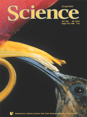 This photograph of a hermit hummingbird (Phaethornis longuemareus) at a flower of Heliconia trichocarpa was chosen for the cover of Science 300 (5619), 25 April 2003. (Photo by Phil Savoie)