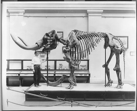 Gidley with Mammut americanum (USNM 8204)