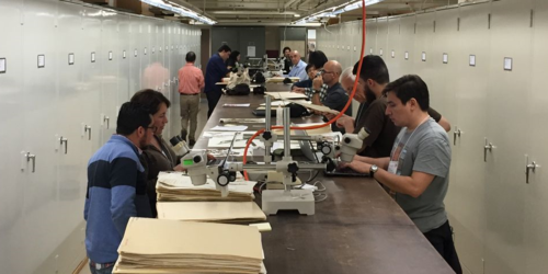 Visiting botanists overtake the pteridophyte herbarium at the National Museum of Natural History, where they conducted research, annotated specimens, and uncovered types, leading to tremendous benefits to the collections.