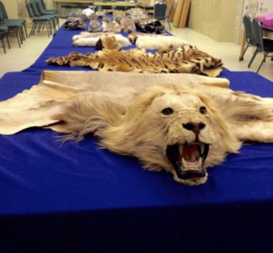 Museum of Wildlife and Fish Biology, UC Davis Biodiversity Day 2015 (Photo from R. Alsheikh)