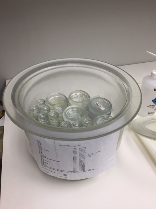 A typical desiccator with dishes of nematodes stored in glycerine.