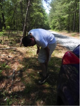 Ricardo Salas Montiel searching for ticks during fieldwork in southern Maryland