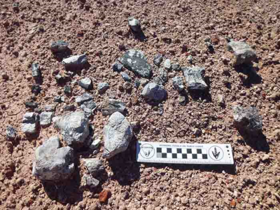 Phytosaur bones on surface