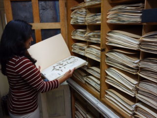 US National Herbarium (photo by Ingrid Lin)