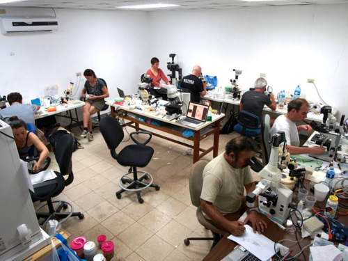 Meiofauna workshop laboratory. We settled the laboratory, complete with our microscopes, at Achotines Bay, Azuero Peninsula. Here, we processed samples, investigated and digitized specimens, and fixed them for future genomics studies. Photo by Ulf Jondelius