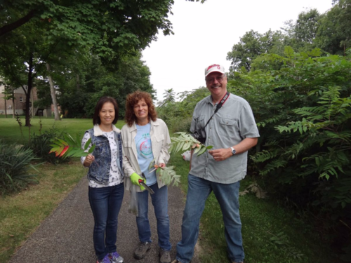 From Left to Right: Zhumei Ren, Sue Lutz and Joe Boggs (Ohio State University) collecting sumac galls in Liberty, Ohio in August 2015.