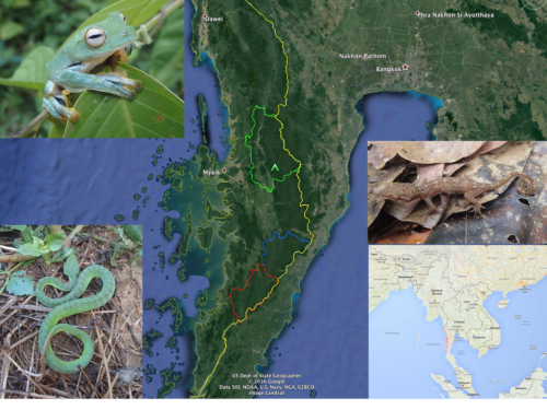 Map of the region and selected taxa, a frog (upper left), a viper (lower left) and a gecko (center right)