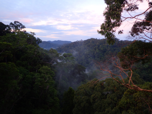 Sunrise over the canopy in the Heart of Borneo