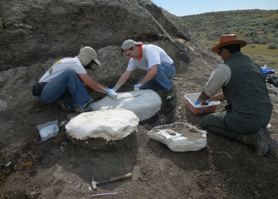 The team builds a field jacket around a fossil-containing block of rock by applying strips of burlap coated with plaster.