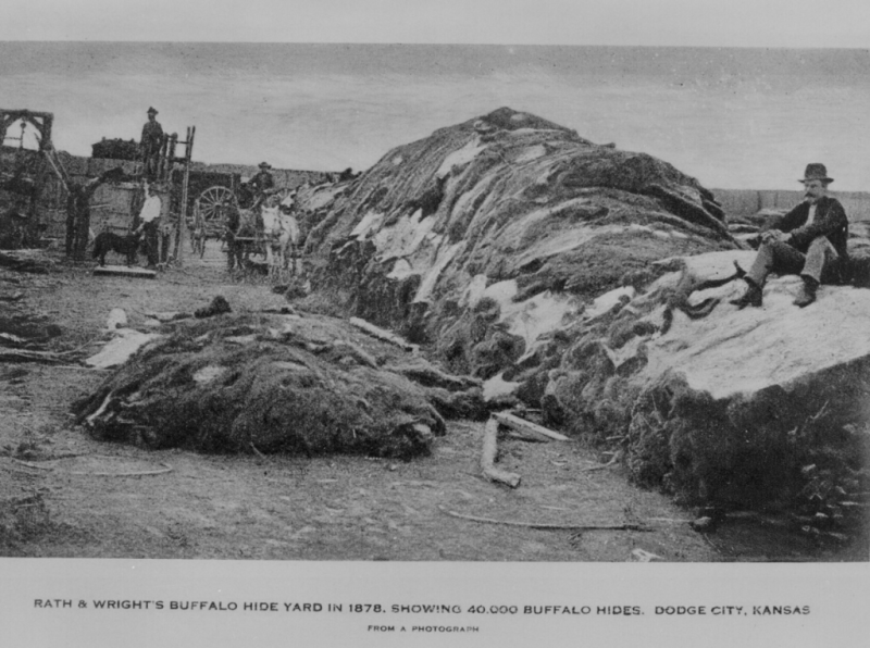 """Rath & Wright's buffalo hide yard in 1878, showing 40,000 buffalo hides, Dodge City, Kansas."" National Archives 79-M-1B-3."