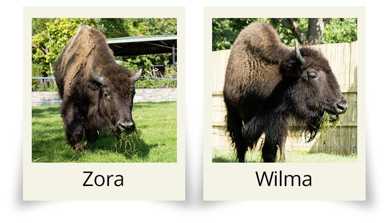 Zora-and-Wilma