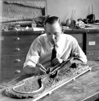 Norman boss as a young man putting the final touches on a lizard skeleton mounted for display.