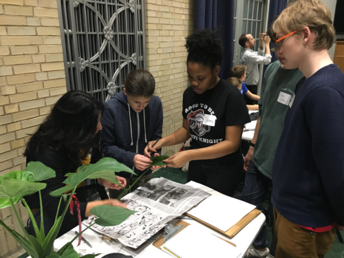Shruti Dube assisting her team of students as they press a voucher specimen of the Chinese taro they identified in the greenhouse. (photo by Lee Coykendall)