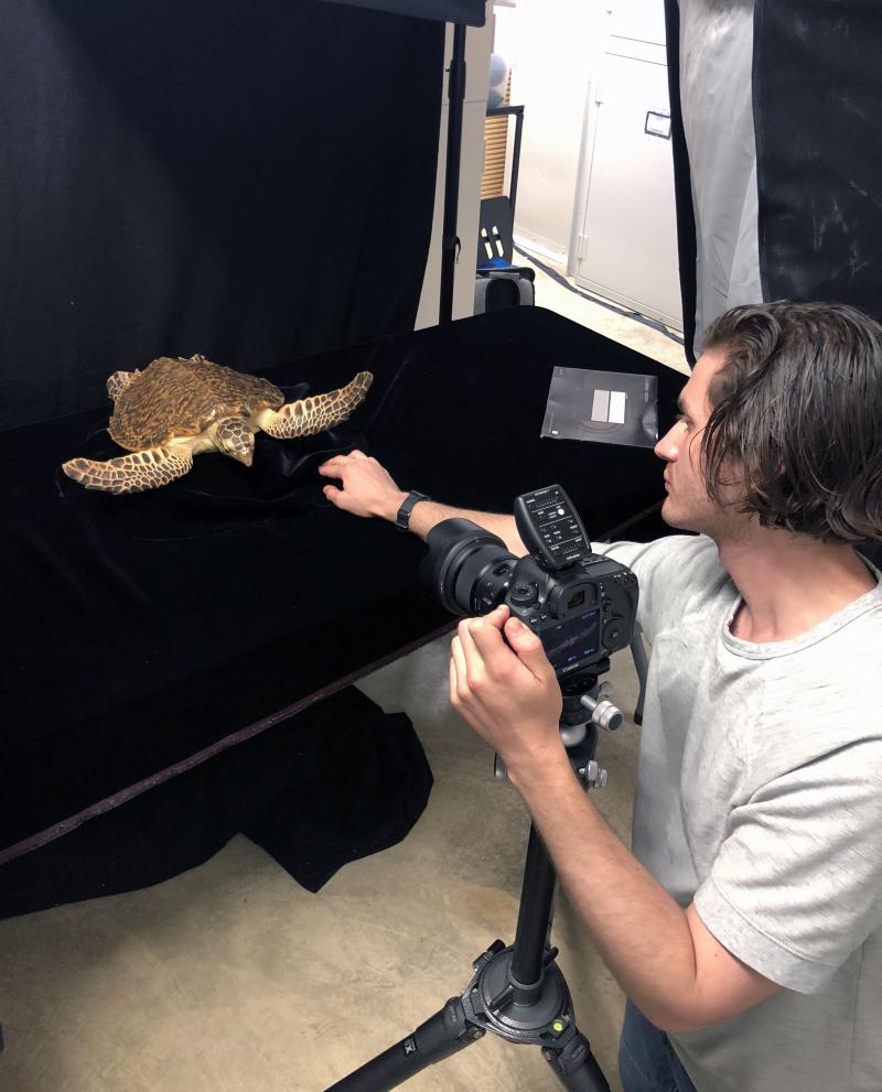 TurtlePhoto