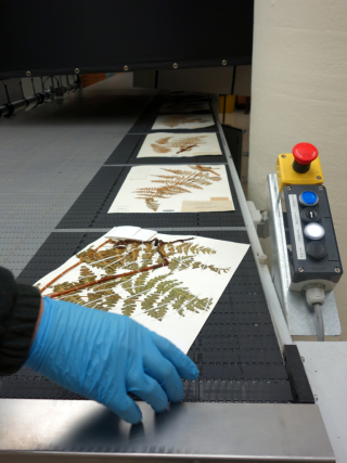 Digitizing specimens