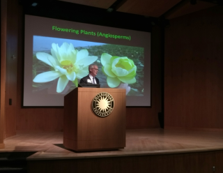 Sir Peter Crane concludes that many of the seed-plant lineages we now treat as independent may be closely allied. (photo by Gary Krupnick)