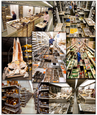 Some of the biological collections housed at the National Museum of Natural History. (photos courtesy of NMNH Photo Services; assembled by Alice Tangerini)