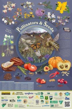 "Pollinator Week 2018 poster, ""Pollinator & Seeds"""