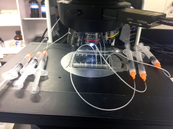 Microfluidic device used for microscopic imaging. (Designed by collaborator Krishna Badhiwala in the Robinson Lab at Rice University).